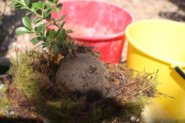 clay ball 3