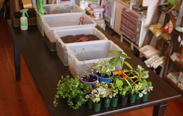 Kokedama: piante pensili senza vaso