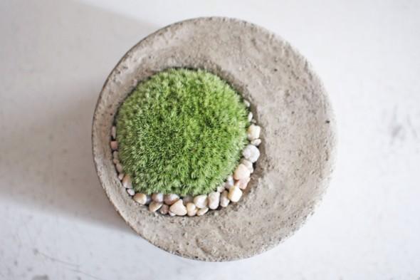 moss planter 1